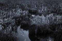 agnieszka-antosik-pop-07