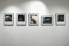wystawa-foto-070118-41